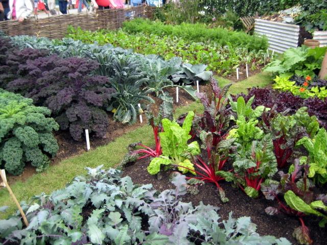 Comment placer vos l gumes dans votre potager blog - Faire un petit potager dans son jardin ...