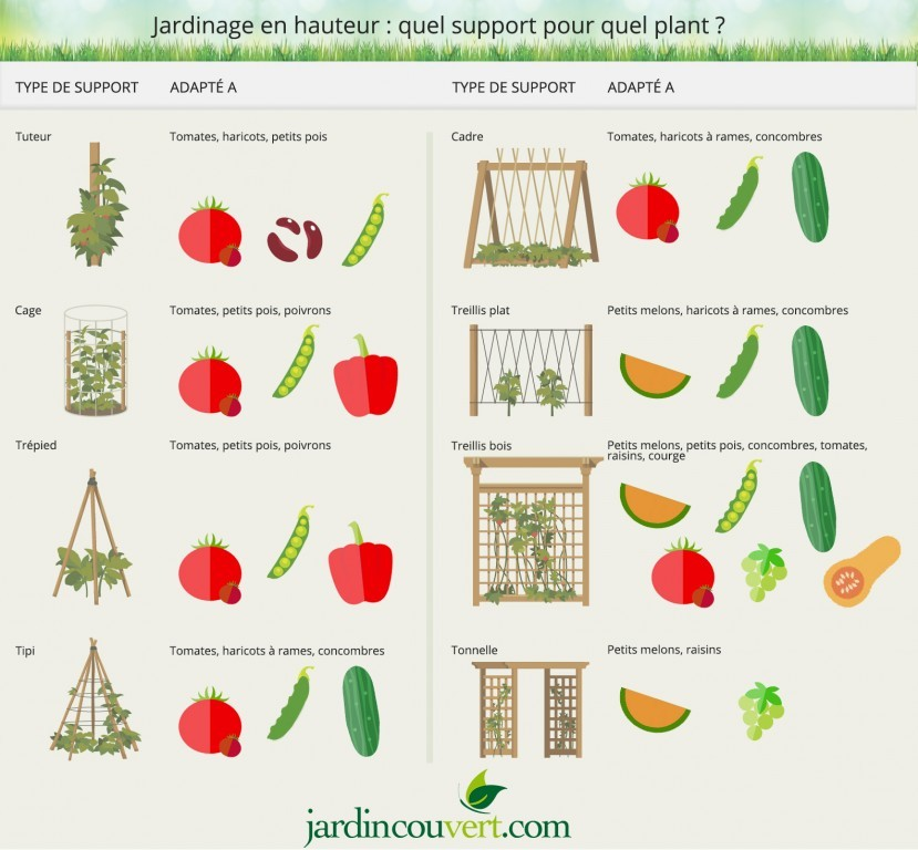 Jardinage en hauteur : quel support pour quel plant ?