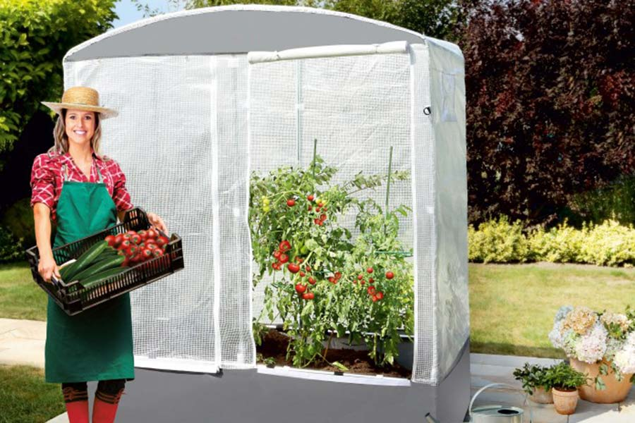 serre patioflora petite serre d 39 hivernage id ale pour les cactus. Black Bedroom Furniture Sets. Home Design Ideas