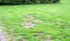pelouse dégarnie