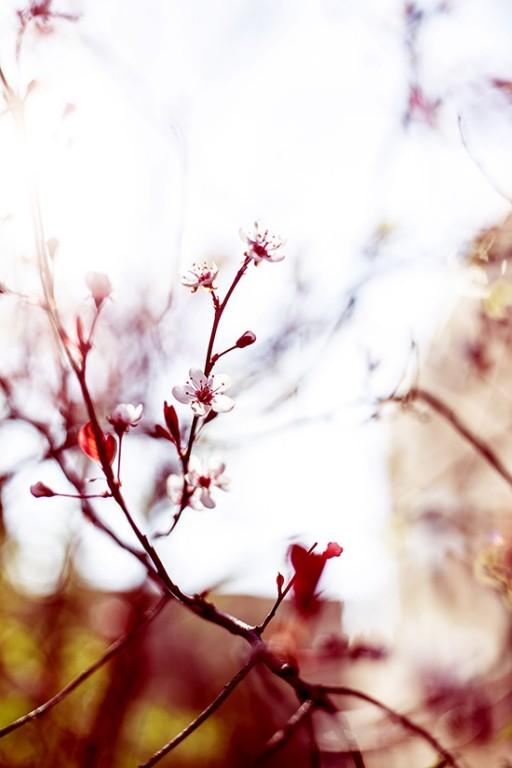 La nature se réveille au printemps