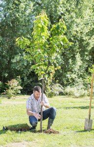 planter arbres fruitiers