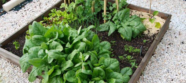 travaux jardin mai