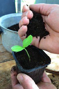 substrat semis