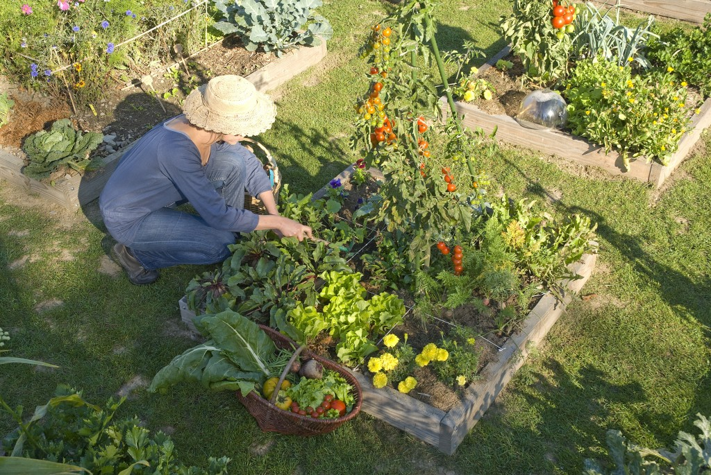 Comment cr er son jardin en permaculture blog jardin - Comment demarrer un jardin en permaculture ...