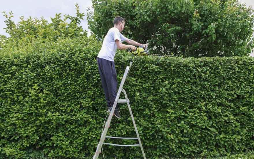 quels sont les travaux de jardinage faire en mars blog jardin couvert conseils jardinage. Black Bedroom Furniture Sets. Home Design Ideas